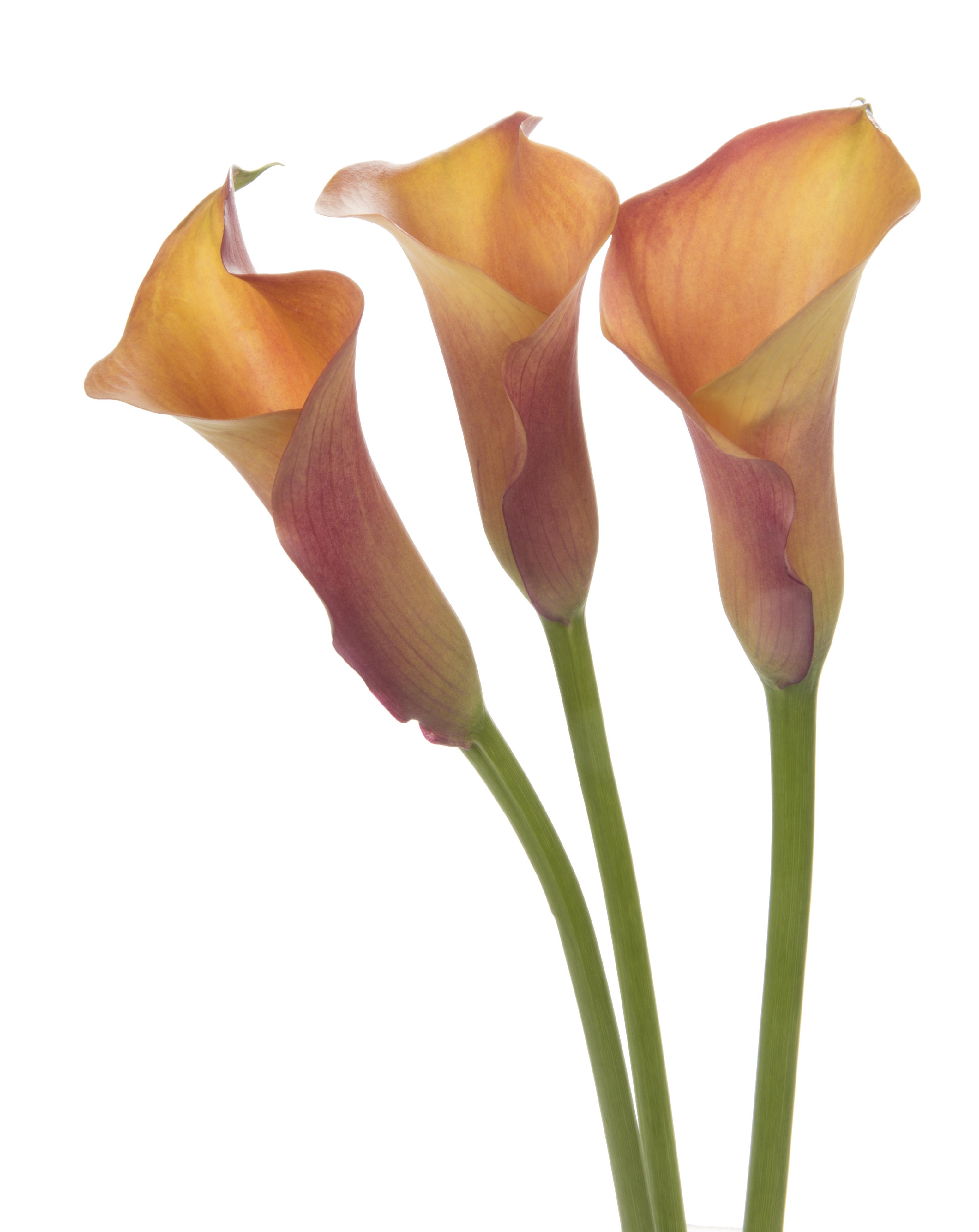 Calla - orange 3 stems