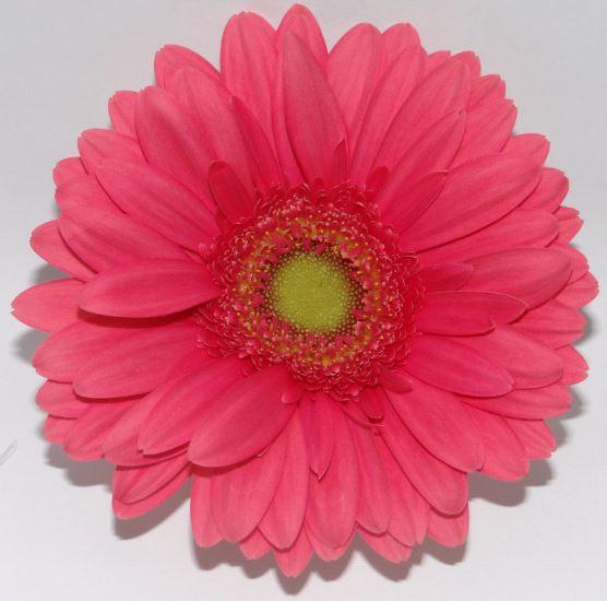 Aviances - hot pink