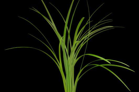 Lily Grass Green