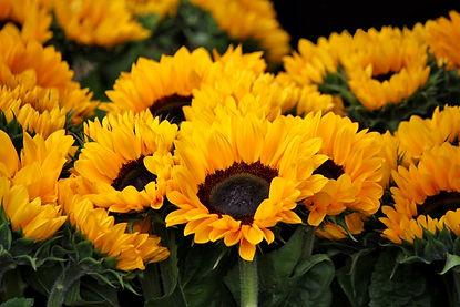 BULK FLOWERS - KRUEGER WHOLESALE FLORIST