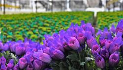 The Queen's Flowers