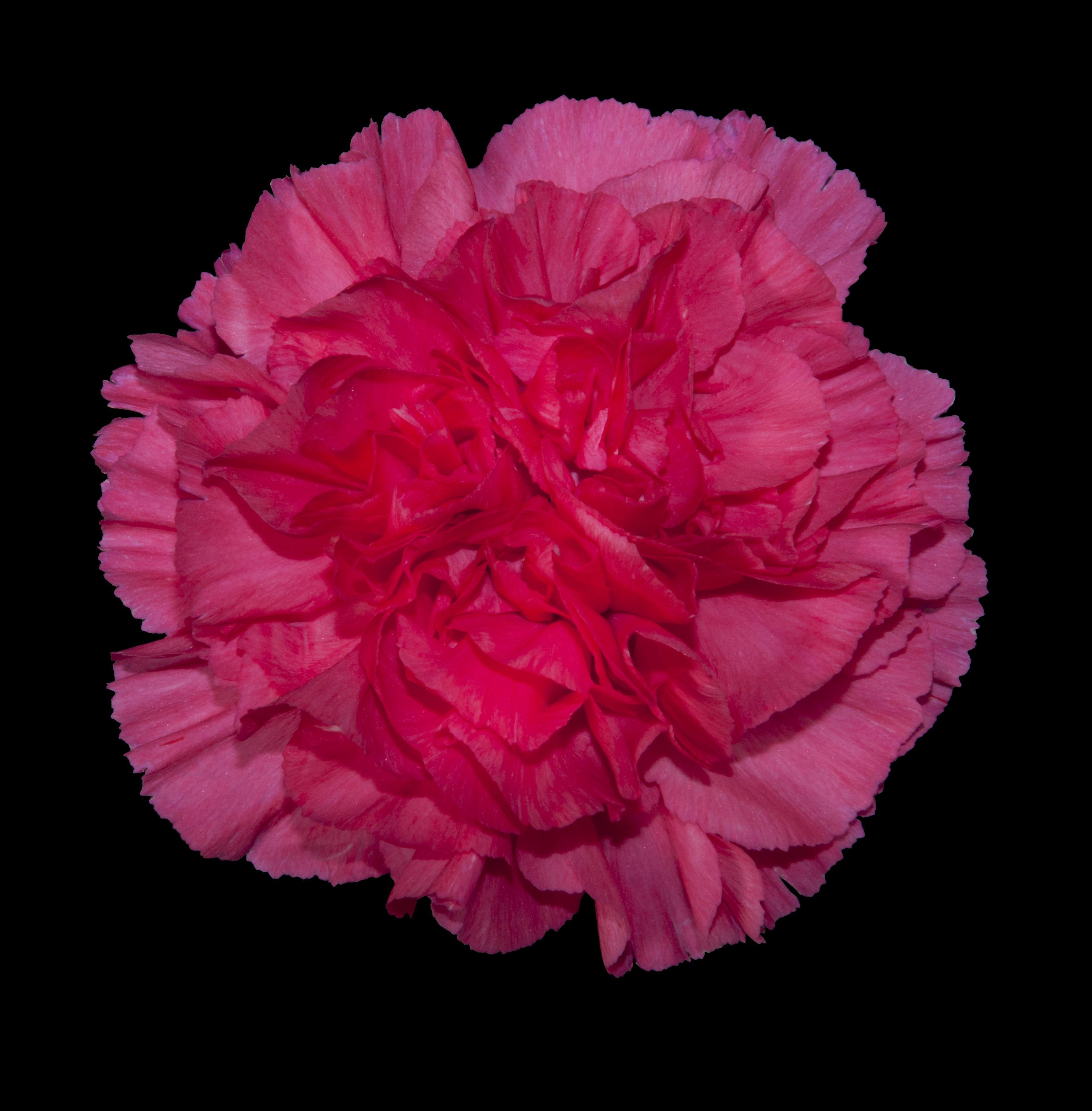 Mandalay - pink