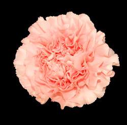 Monalisa - novelty peach
