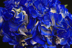 Tinted Dark Blue