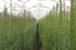 Farm, path.JPG