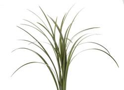Greens - Lily Grass Green