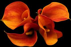 Mango - orange