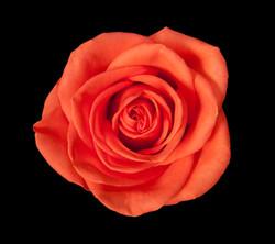 Orange Crush - orange