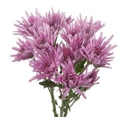 Pompon Novelty - lavender