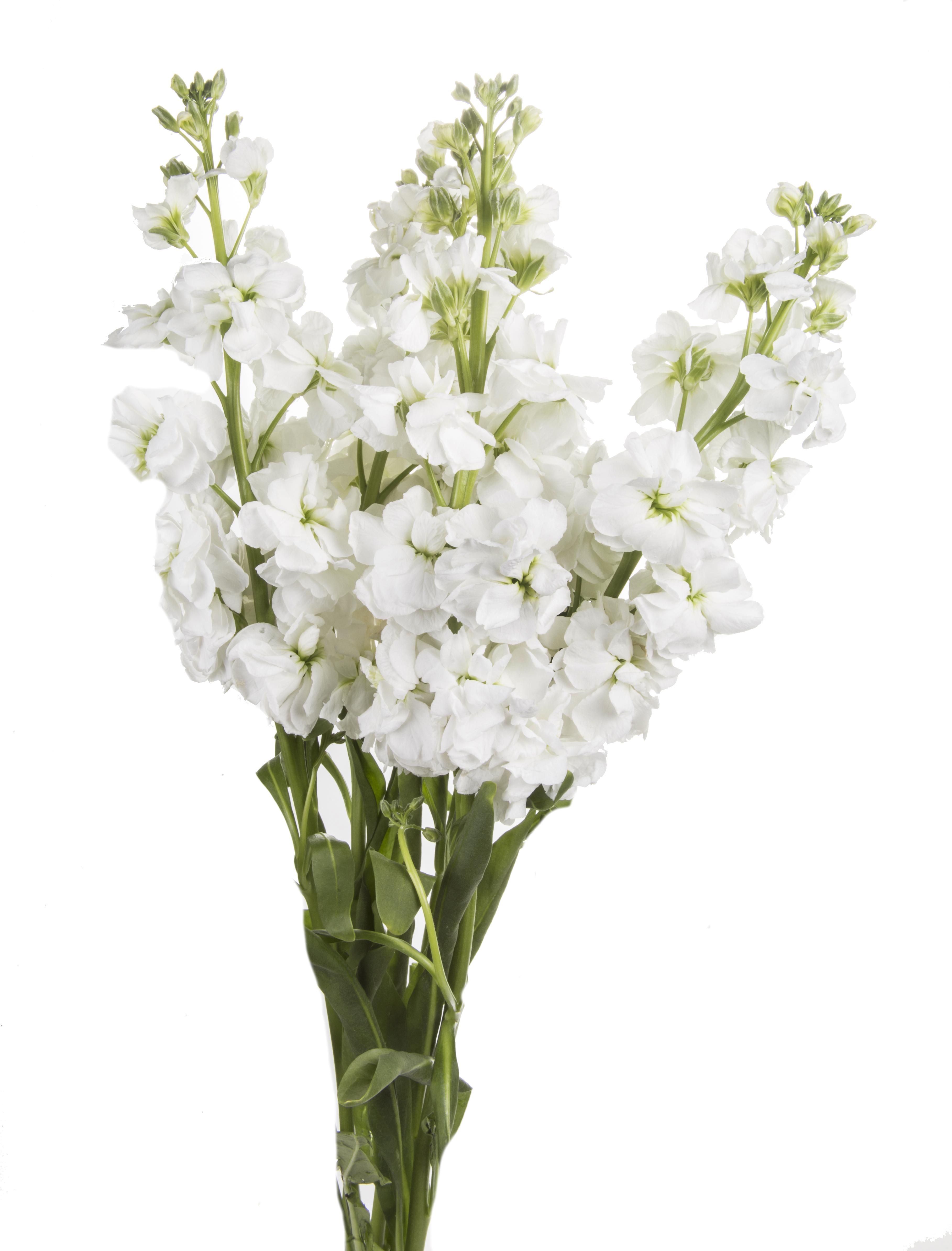 Stock - white
