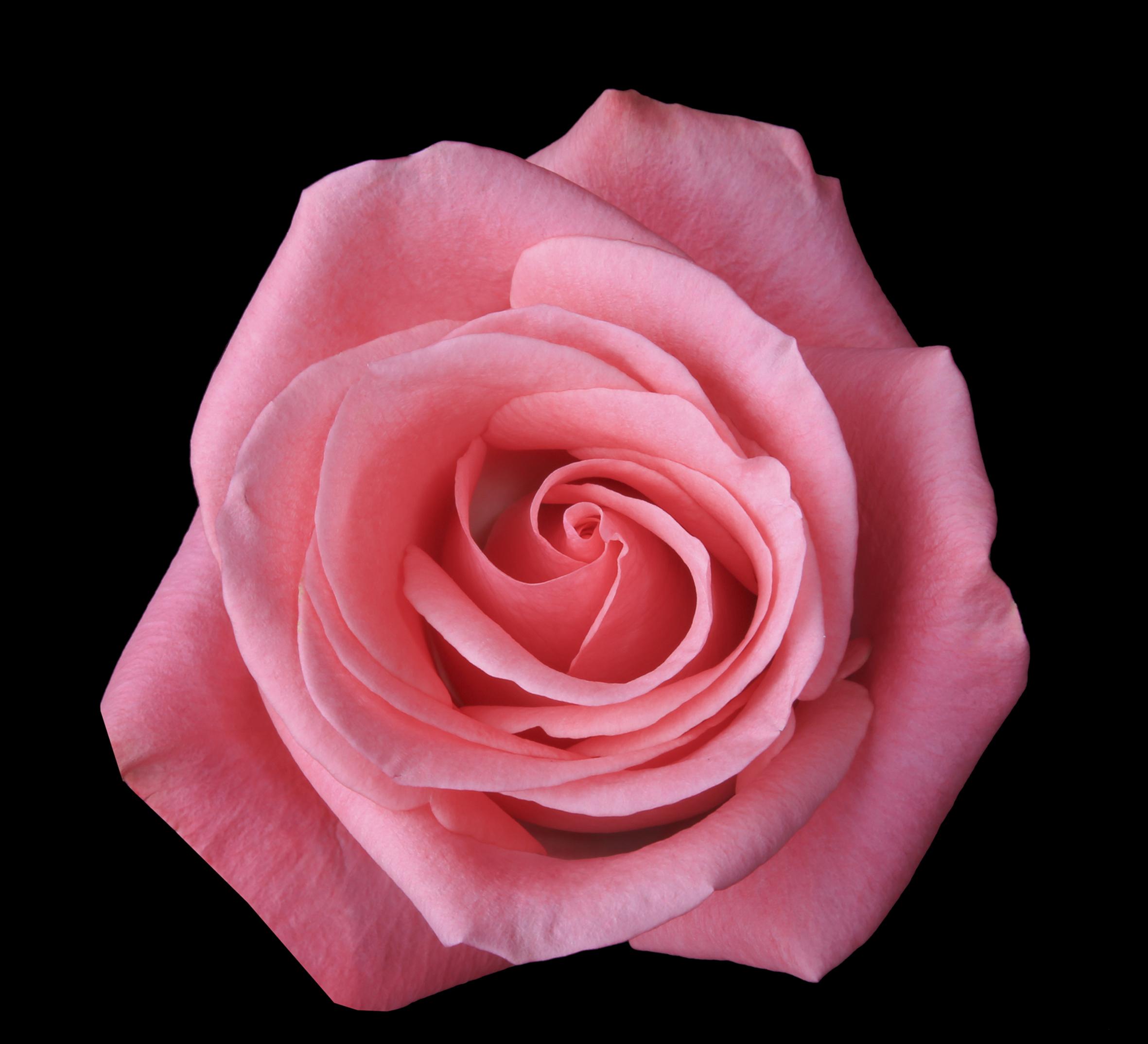 Orlando - dark pink