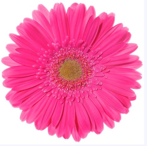 Banesa -  - hot pink