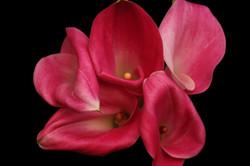 Garnet Glow - pink
