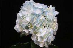 Spray Blue