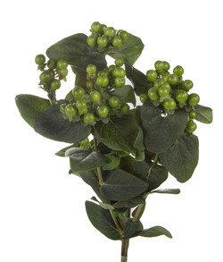 Hypericum - green