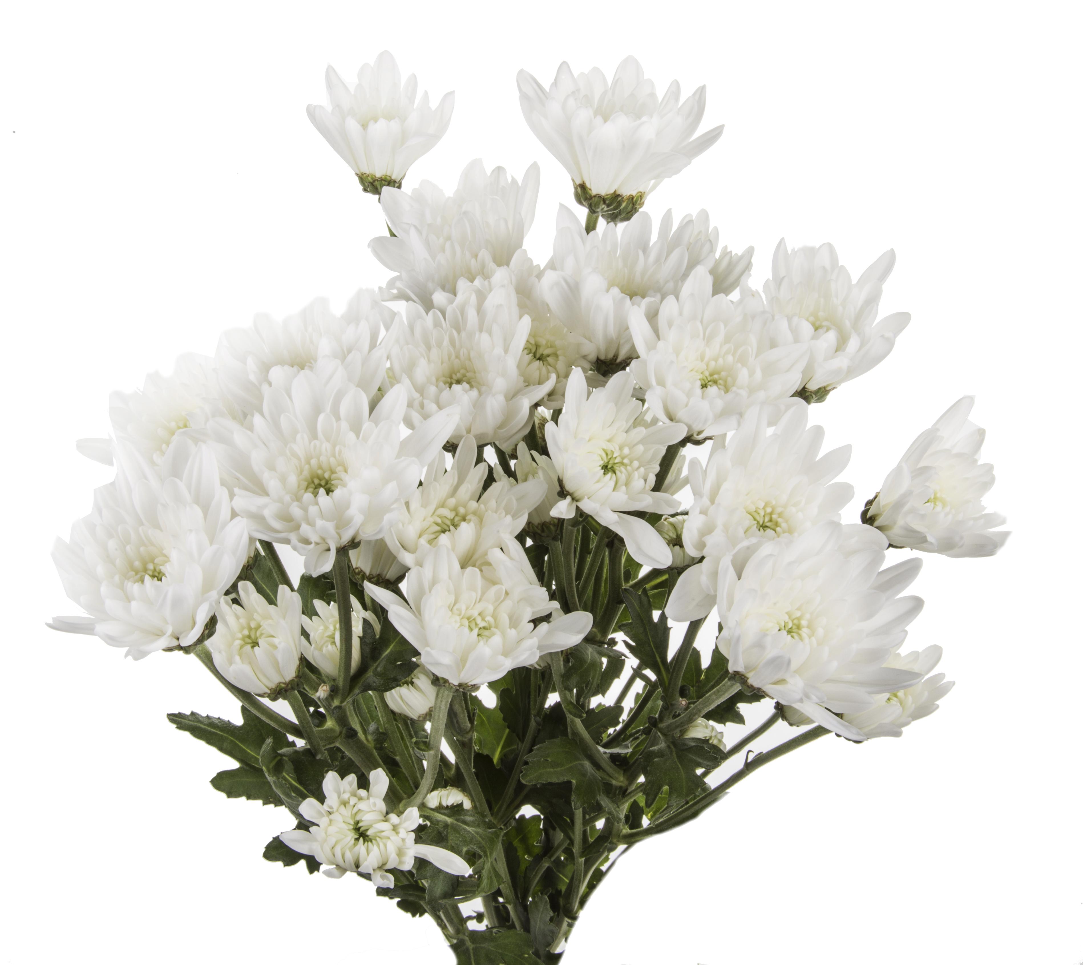 Pompon Cushion - white