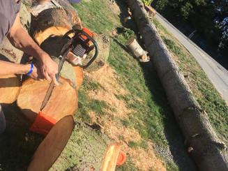 recent tree job.jpg
