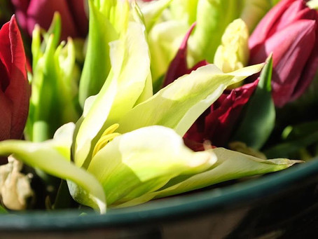 Sunshine and Tulips!