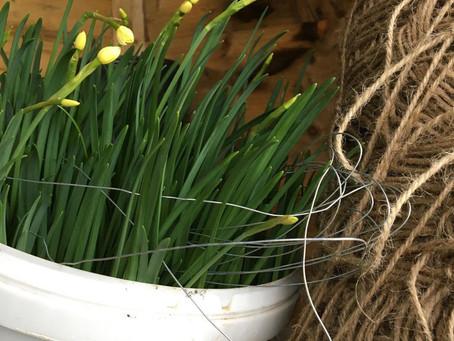 Blooming in a bucket...Oops!