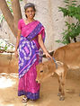 Lady in pink sari with calf.jpg