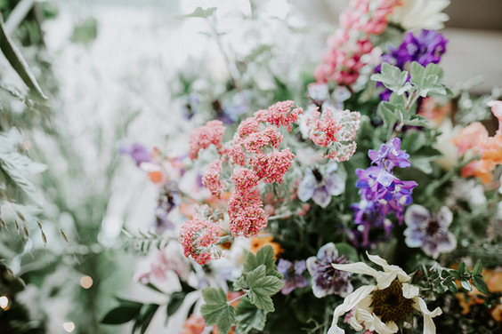 Close up British flowers SB.jpg