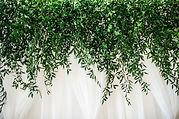 vandg-48 green curtain crop.jpg