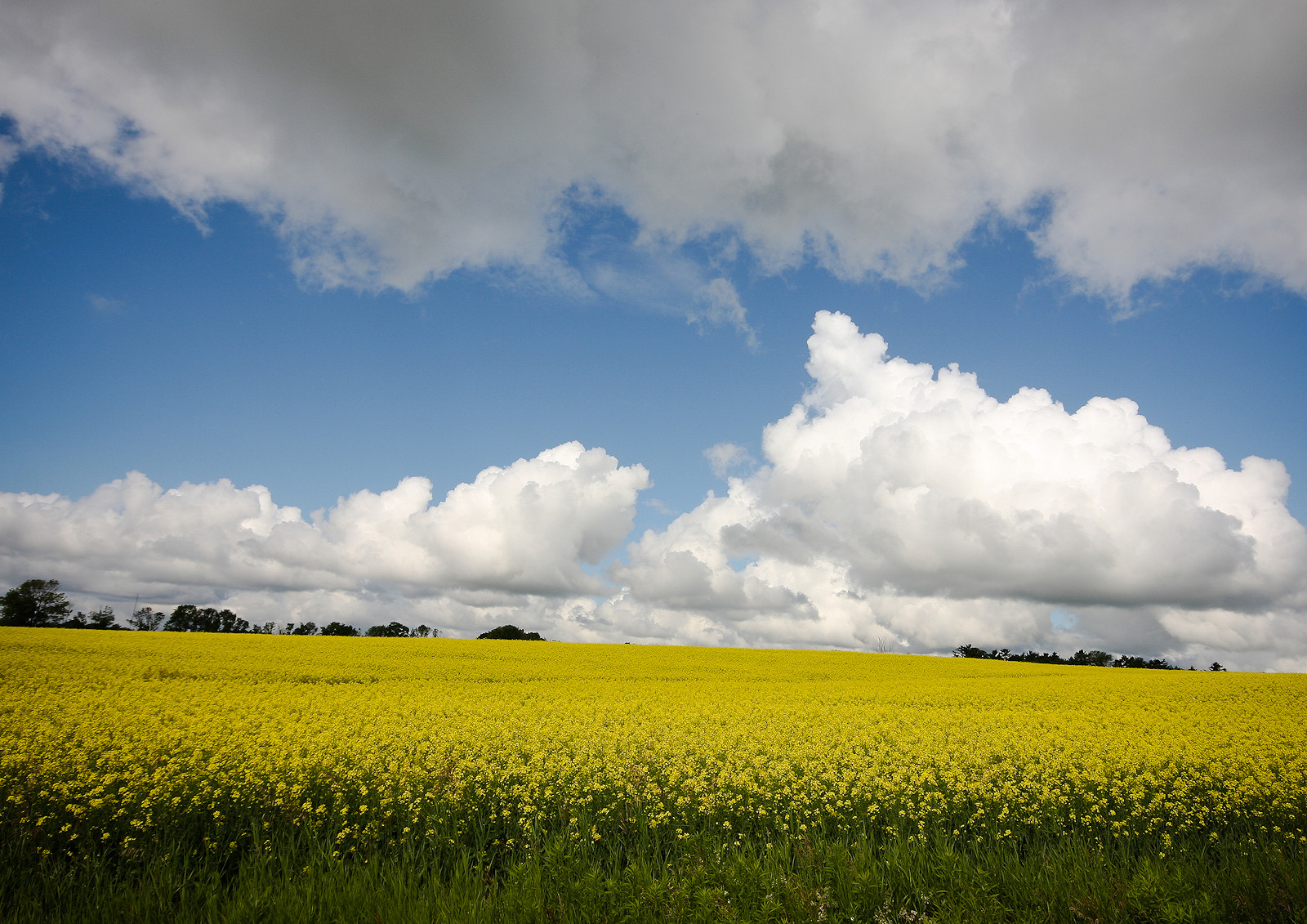COLOUR - Field of Yellow by Dave Beattie (7 marks)