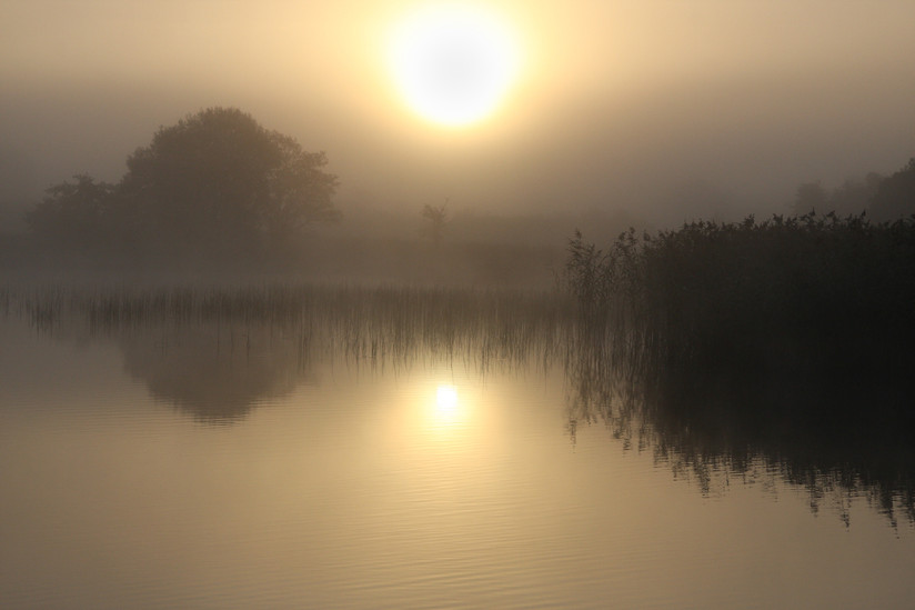 PDI - Misty by Dave Beattie (8 marks)