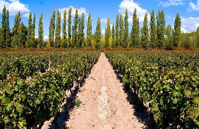 Cabrini Wines - Bodega Cabrini Perdriel