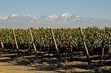 Cabrini Wines - Bodega Cabrini. Viñedo Tupungato.