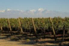 Cabrini Wines - Tupungato Vineyard.