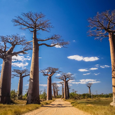 Le Devin de Madagascar