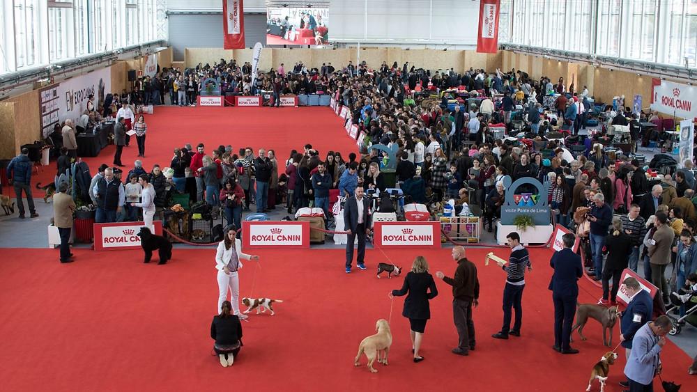 III Exposição Canina Nacional do Alto Minho e II Exposição Canina Internacional de Ponte de Lima | Peneda Gerês TV