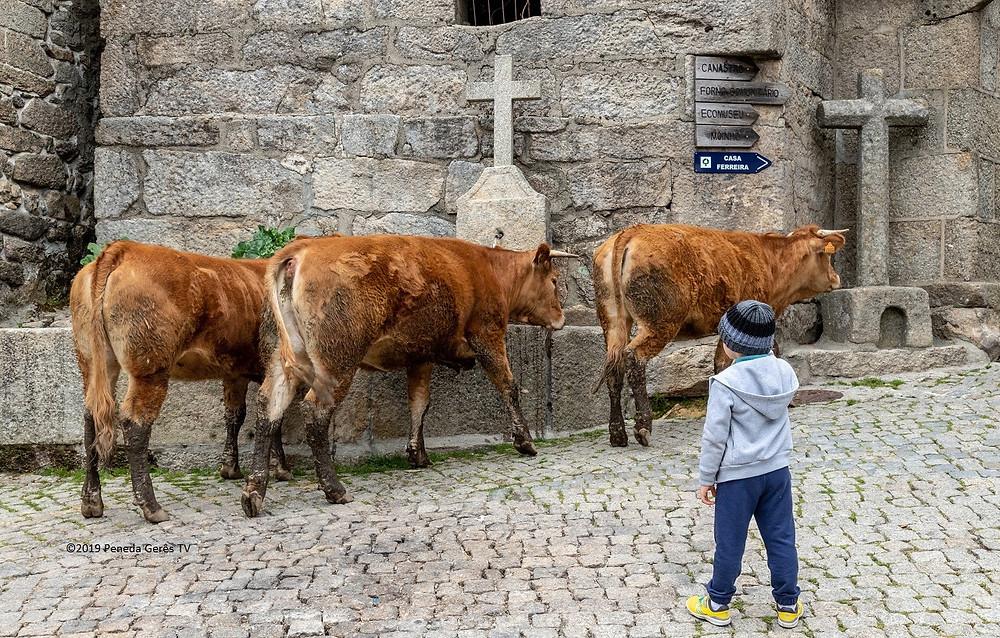 Montalegre aplica 500 mil euros na agricultura | Peneda Gerês TV