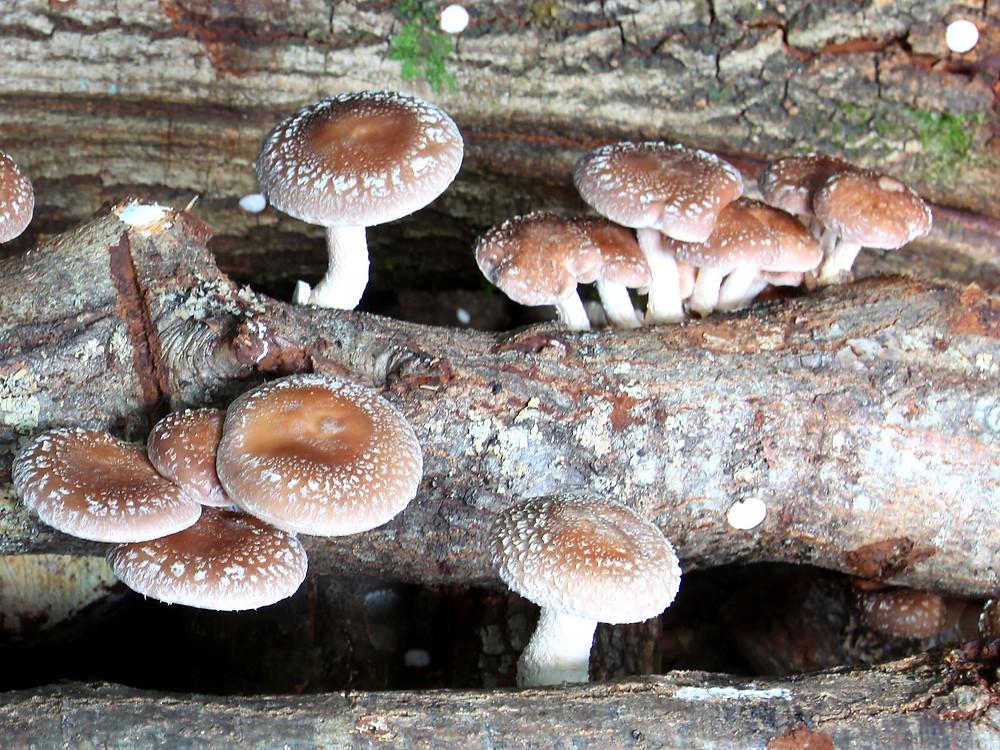 Conhecer os cogumelos de Castro Laboreiro a caminhar | Peneda Gerês TV