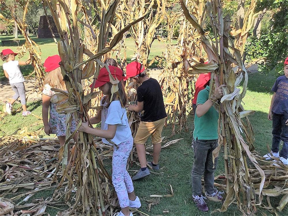 CIT dedica primeira sessão da área projeto ao ciclo do milho | Peneda Gerês TV