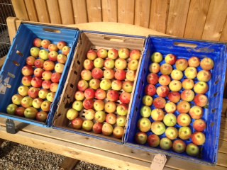 Pool Cottage Apples for Store