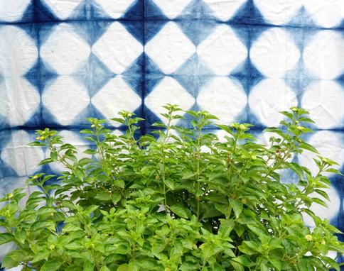 Lush botanic