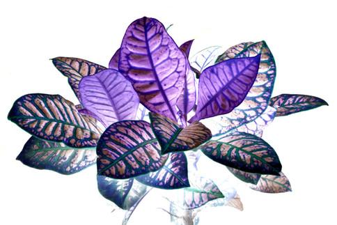 Heavenly Plants Nº01