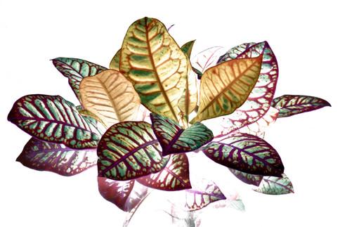 Heavenly plants Nº05