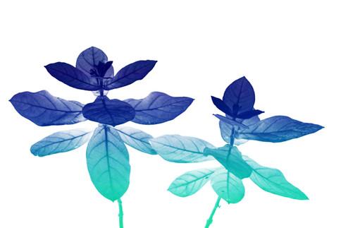 Heavenly Plants Nº10