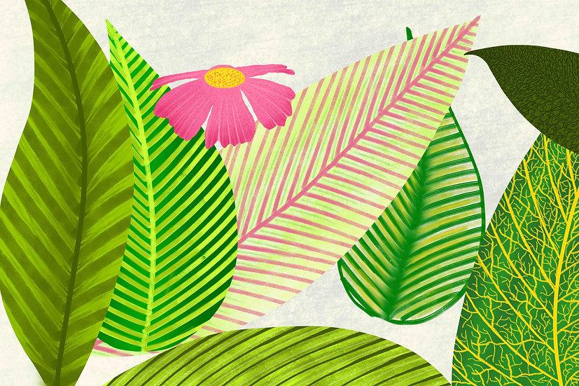 Leafology