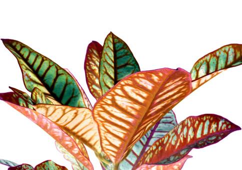 Heavenly Plants Nº03