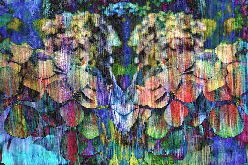 Hydrangeas at Woodstock Limited Edition print