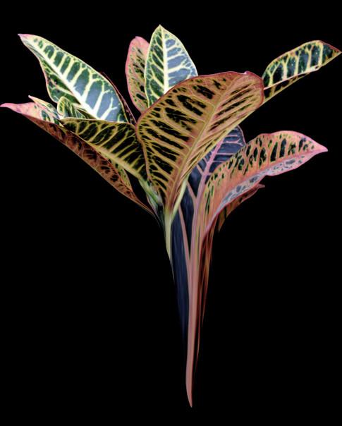 Heavenly Plants Nº04
