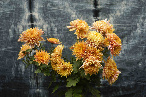 Orange botany