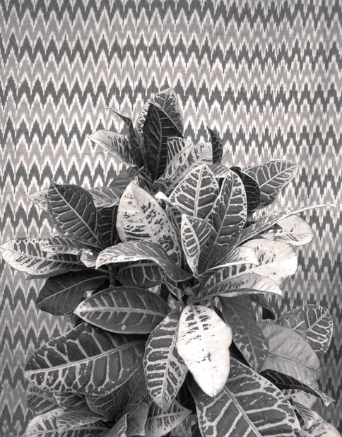 Mono-botany