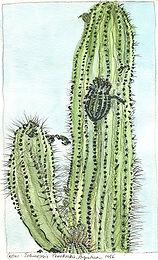 UCB cactus-EDIT.jpg