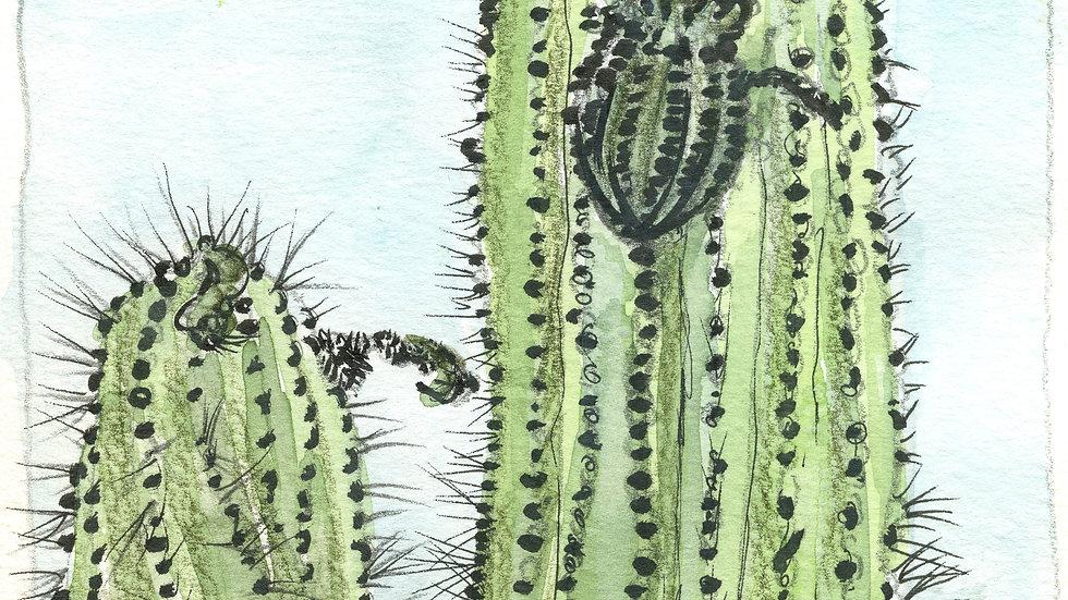 UCB Cactus