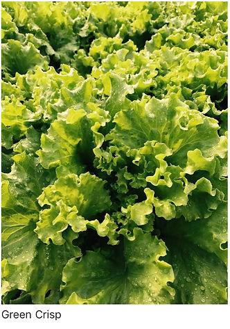 Green Crisp.jpg
